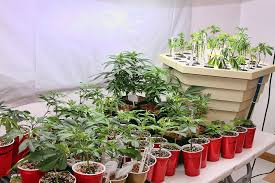 marijuana grow house